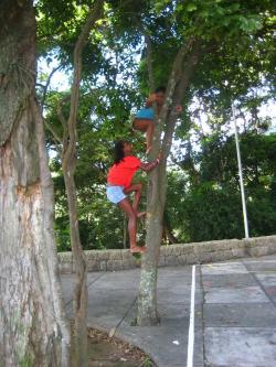 International Tree Climbing Day - Rio